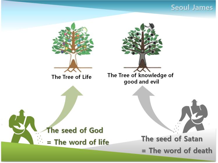 Shincheonji testify-tree of life-004