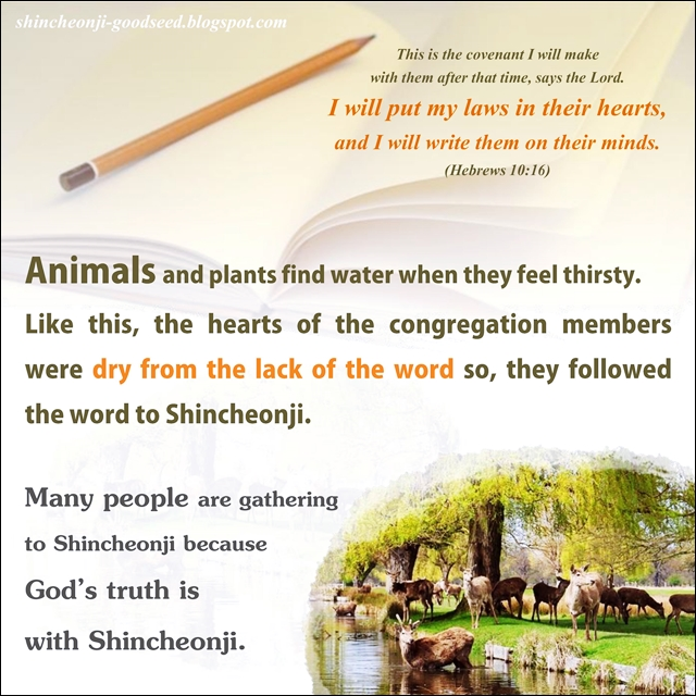 Shincheonji Church have done nothing wrong_ Shincheonji is not a heresy-0003 - Copy - Copy